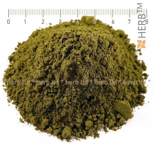 гиностема, gynostemma pentaphyllum