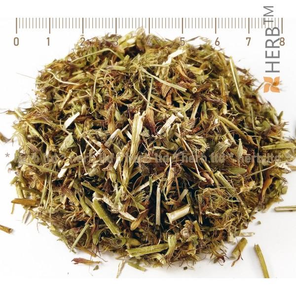feline step herb, feline step healing properties, feline step for healthy heart, feline step tea price