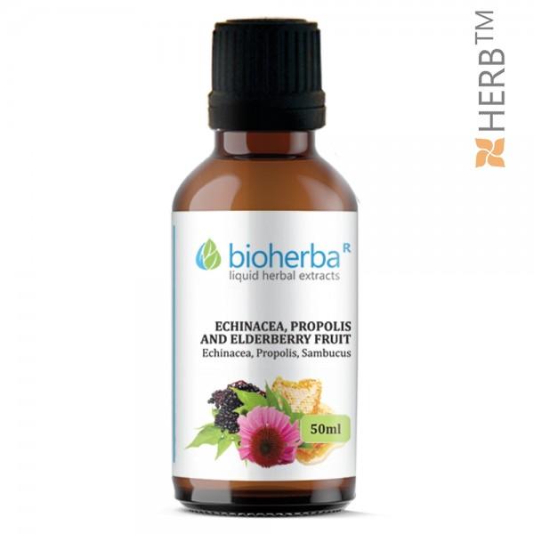echinacea, propolis, elderberry, tincture, immune system