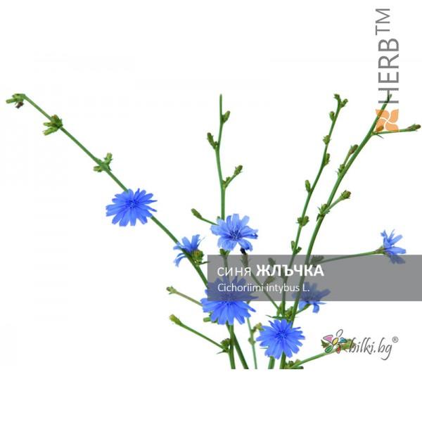 синя жлъчка, cichoriimi intybus l.