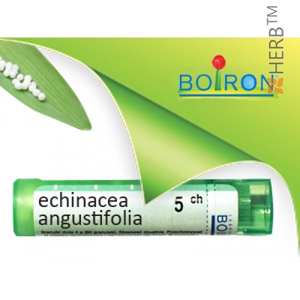 ехинацея, echinacea angustifolia ch 5, боарон