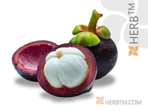 Garcinia Cambogia Fruit Cut Garcinia Cambogia Gummi Gutta Fruit 100g