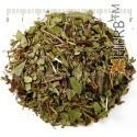 BILBERRY RED, LEAF, Lingonberry, Cowberry, Vaccinium vitis-idaea L