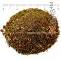 Huperzia Cut, Lycopodium selago, Huperzia selago, stem, HERB TM