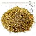 YELLOW YARROW STEM & FLOWERS Achillea millefolium L., stem