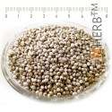 Purple Gromwell Seeds, Lithospermum Officinale, seed
