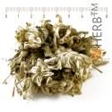 Edelweiss, whole cut, Leontopodium alpinum, stem, flower, HERB TM