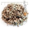 Mullein, yellow verbascum, Verbascum thapsus, flower, HERB TM