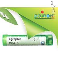 agraphis nutans, boiron