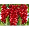 Black Schisandra Berry Whole, schisandra fruit, Chinese lemongrass, Schisandra chinensis, schisandra tea price