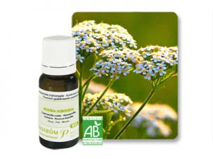 pranarom, essential oils, common yarrow